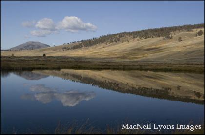 Blacktail Ponds Reflection - Copyright MacNeil Lyons Images