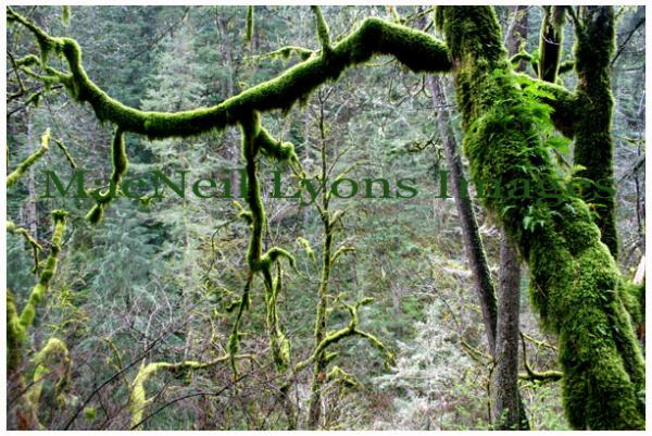 Columbia River Green - Copyright MacNeil Lyons Images
