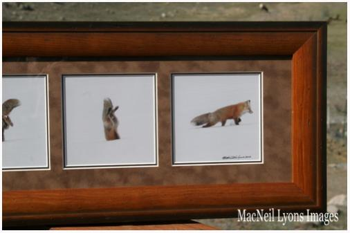 Closer View of the framed Jumping Fox Sequence!