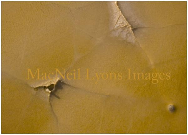 Orange Crust - Copyright MacNeil Lyons Images