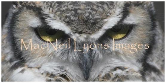 Owl_Eyes_Copyright_MacNeil_Lyons_Images